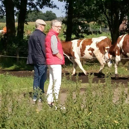 Oversteken koeien